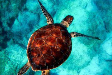 7 Geheimnisse der Schildkröte - Buchtipp - Innere Ruhe finden