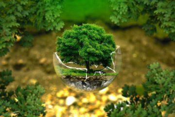 Klimaschutz und Kapitalismus - Passt das zusammen? Viele halten die beiden für Widersprüche. Ich möchte heute aber zeigen, dass beides sehr gut miteinander in Einklang zu bringen ist.